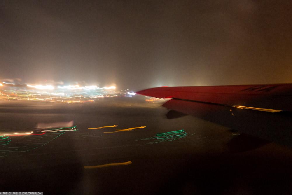 redwings-03.jpg