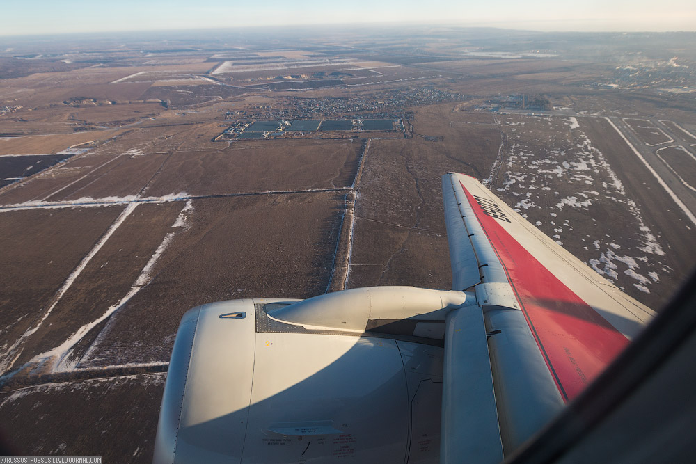 redwings-31.jpg