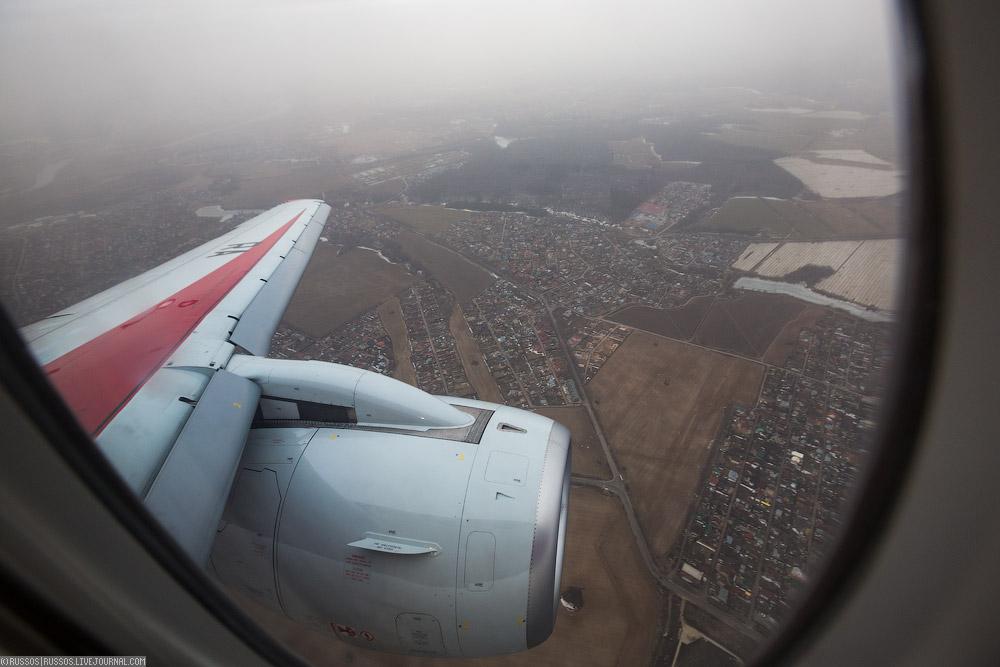 redwings-35.jpg